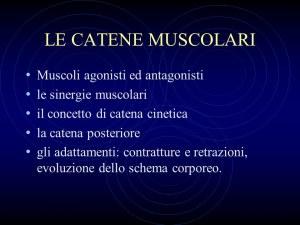 catene-muscolari-prof-antonio-pacilio